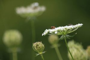 sommerwiese-7